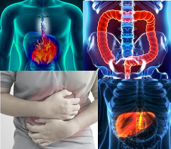 Gastrointestinal and liver diseases